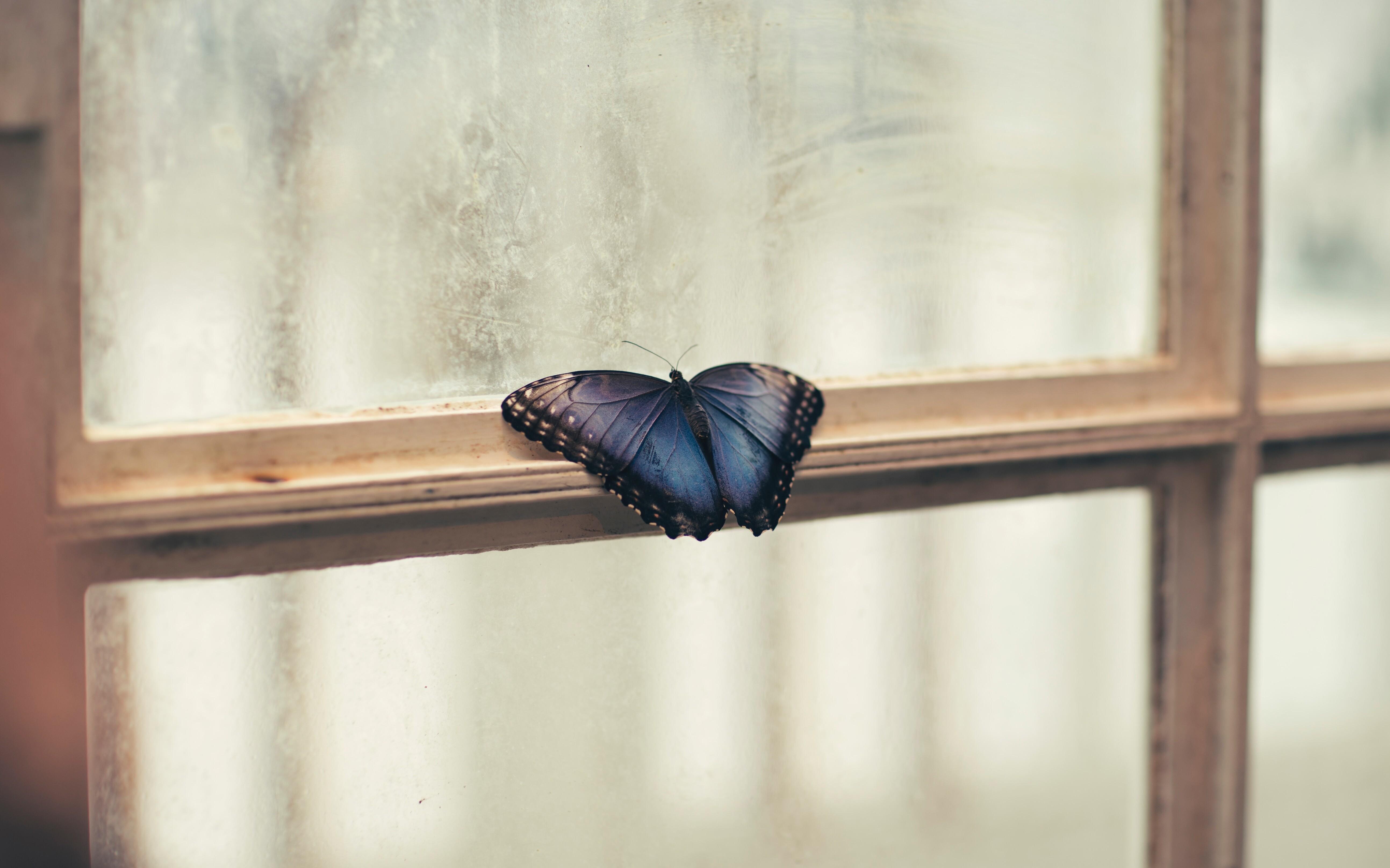 Эффект бабочки: о чем предупреждают насекомые во сне