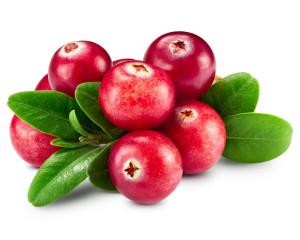 При цистите можно использовать не только ягоды, но и листья брусники. Они оказывают антисептическое действие. Фото: Fotolia.com
