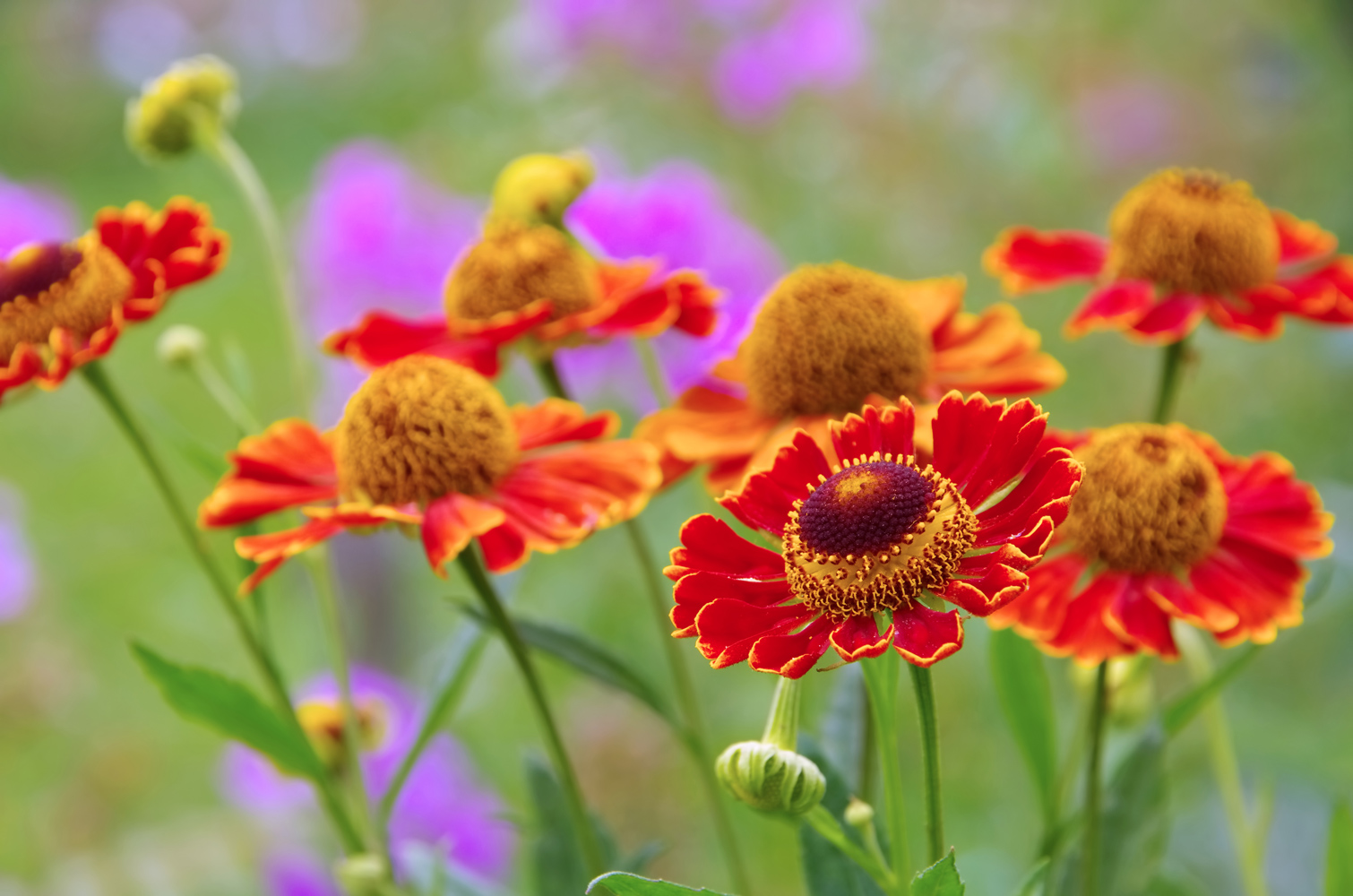картинка цветов осенних