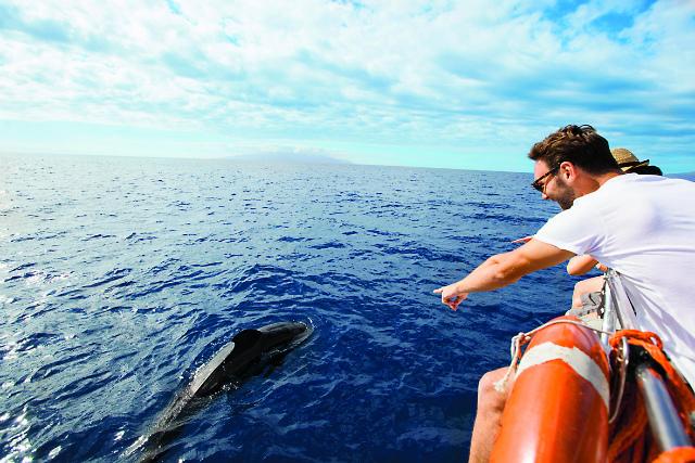 Черные киты-пилоты сопровождают прогулочную яхту