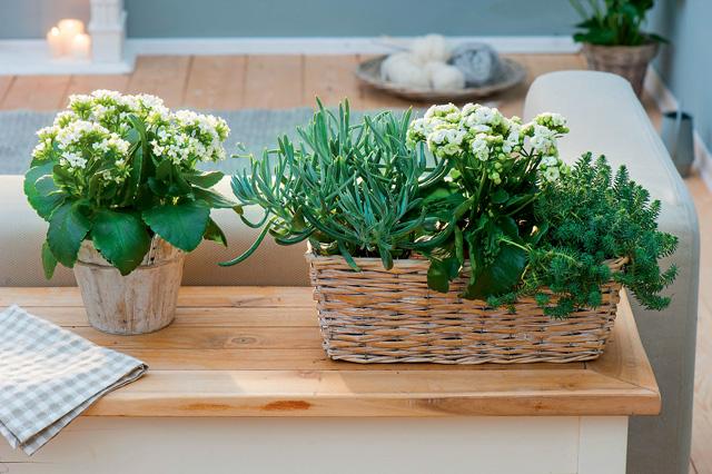 Цветущие зимой комнатные растения: выбор иуход