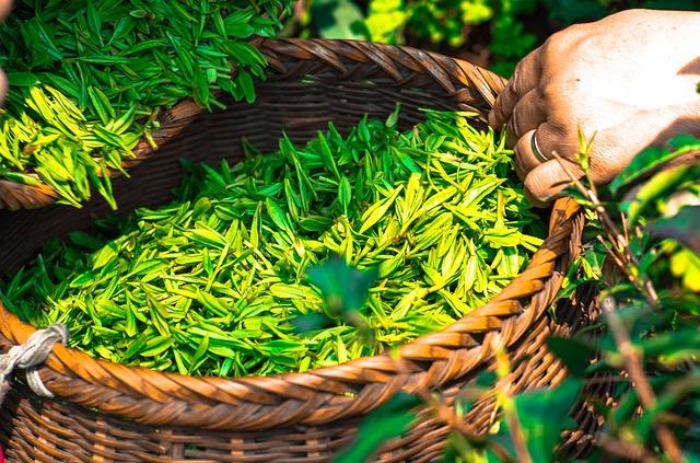 Вред зеленого чая: 7 причин отказаться от популярного напитка