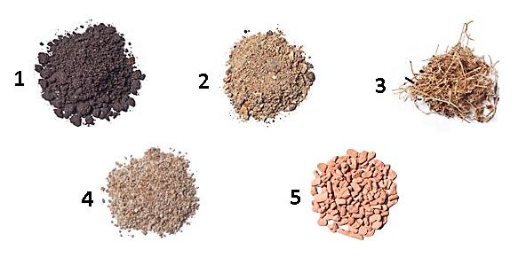 Как сделать флорариум своими руками: пошаговая инструкция