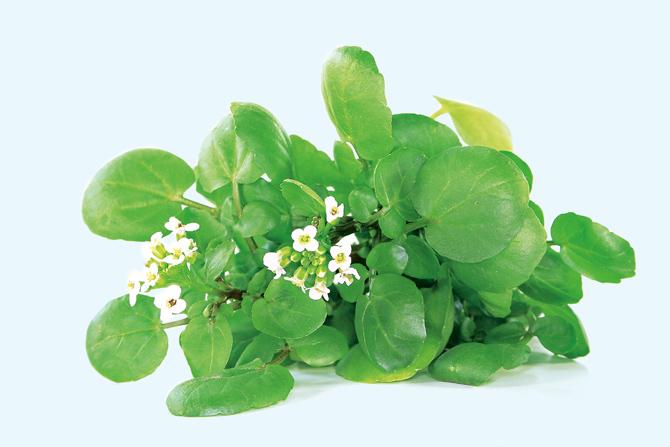 Весенняя зелень на столе: лучшие витаминные рецепты
