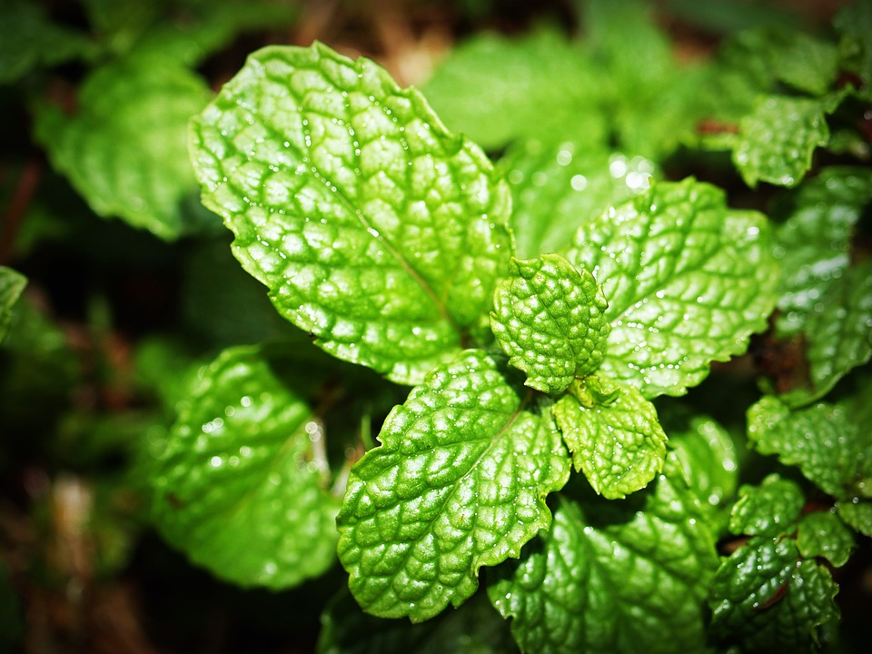 7 самых полезных растений длячеловека