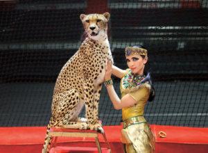 Дрессировщица гепардов Дарья Костюк: как приручить зверя