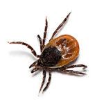 Экстренные меры при укусах насекомых