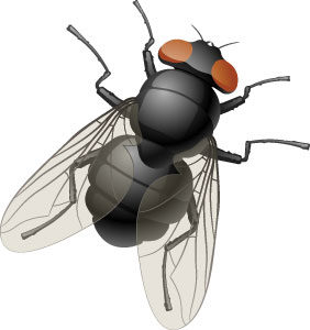 Как избавиться отнасекомых надаче