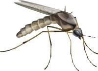Как избавиться от насекомых на даче