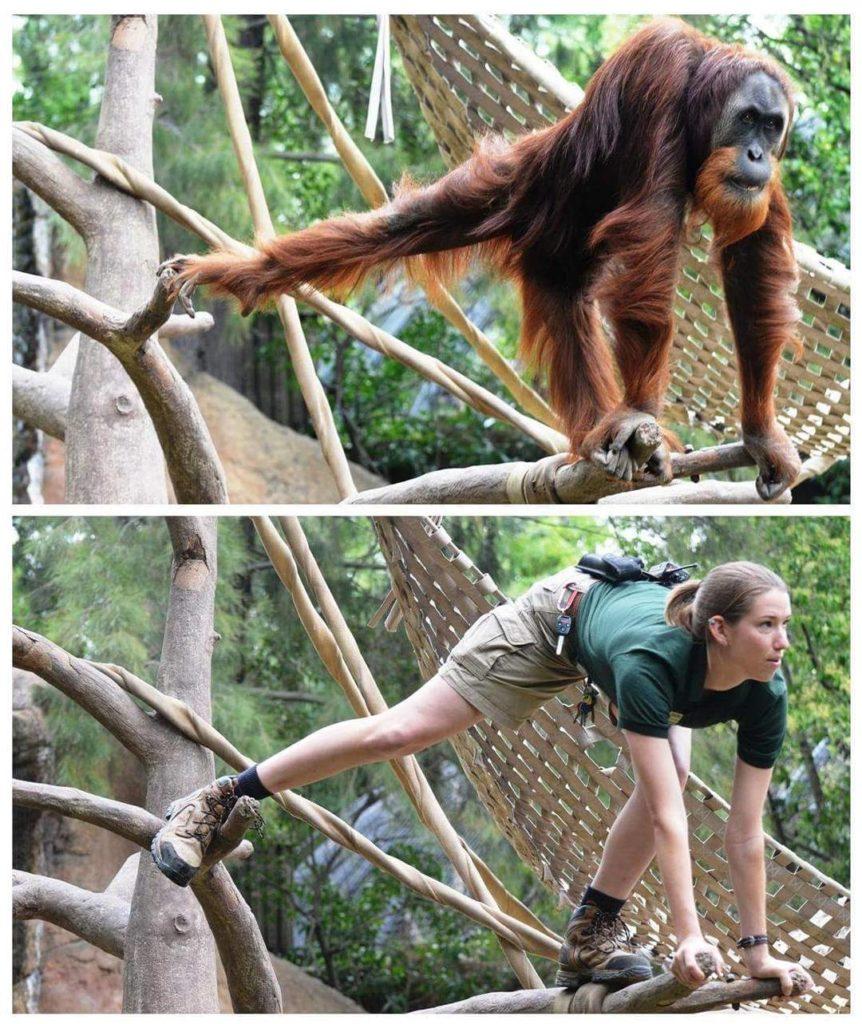 Работники зоопарка забавно копируют своих подопечных (фото)