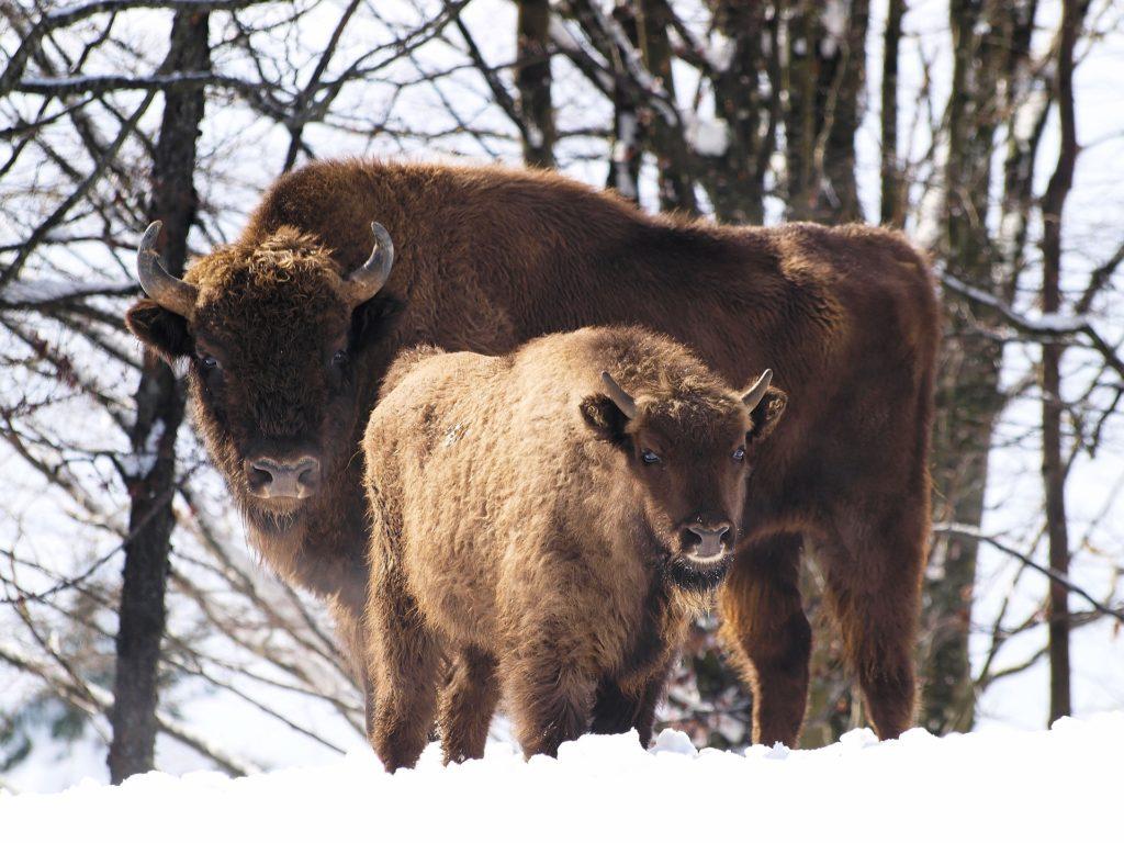 Куда поехать с детьми зимой? 7 экскурсий к животным