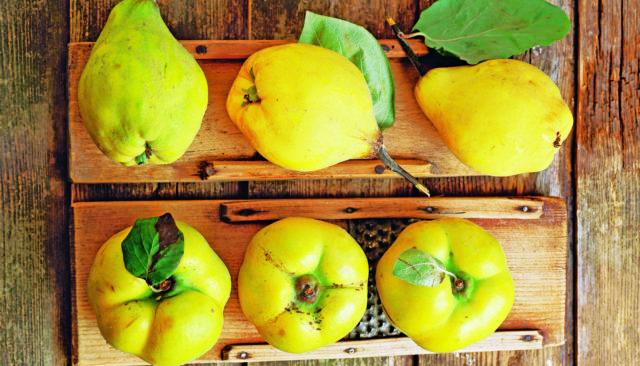 Айва: полезные свойства и рецепты вкусных блюд