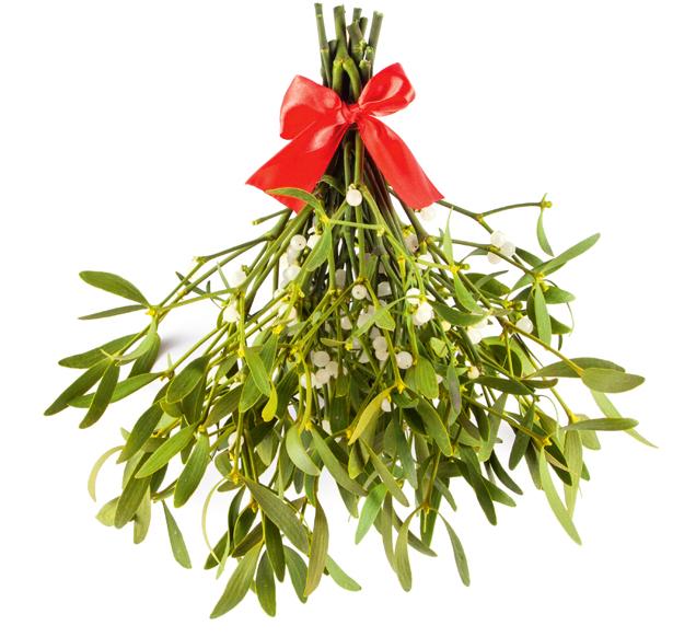 Как ухаживать за цветами зимой: свет, полив, добавки