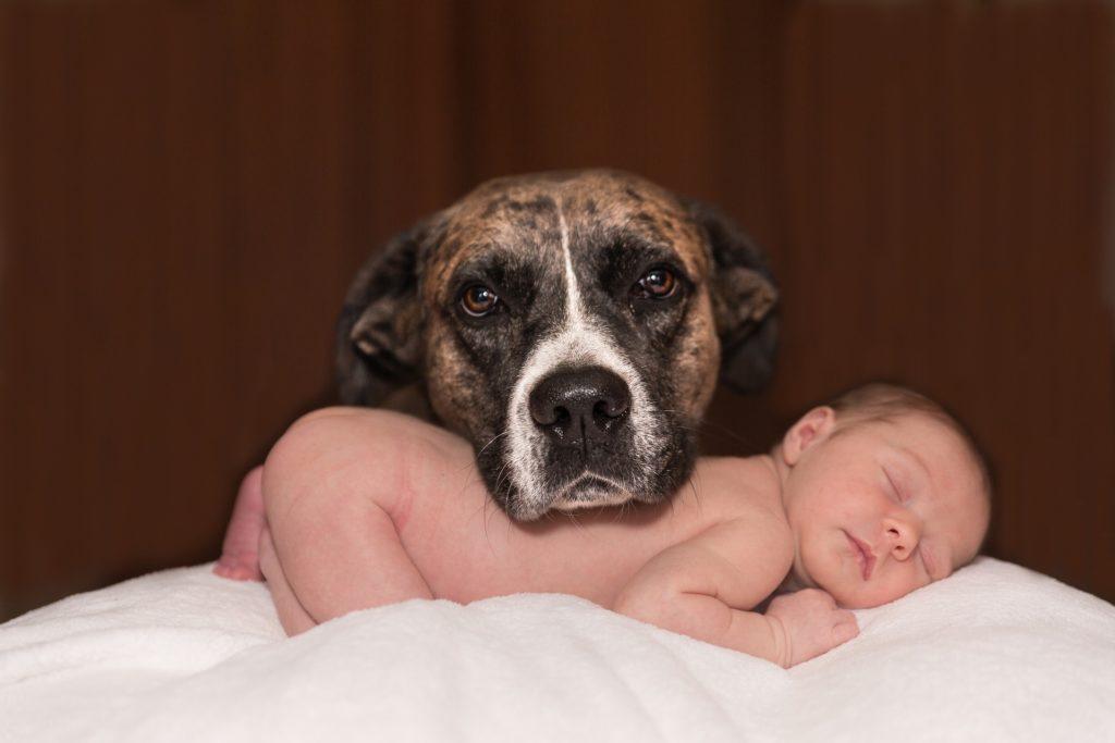 Собака и маленький ребенок