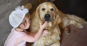 Собака и маленький ребенок в доме