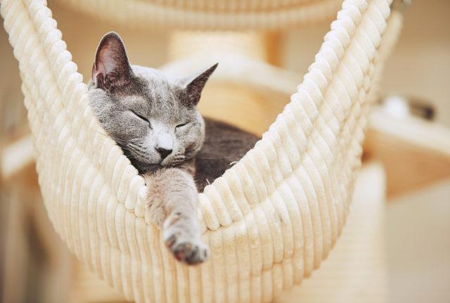 Что делать, если кошка постоянно спит? Мнение профессионалов