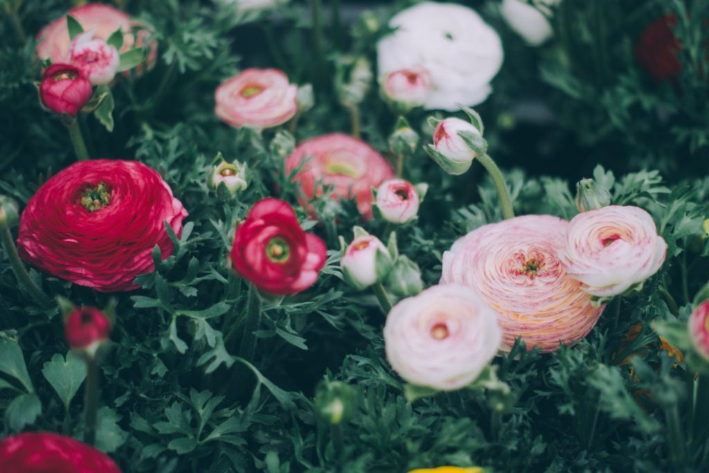 Какой ты садовод по знаку Зодиака?