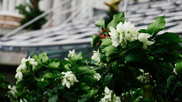 17 идей дачных цветников для «чайников»