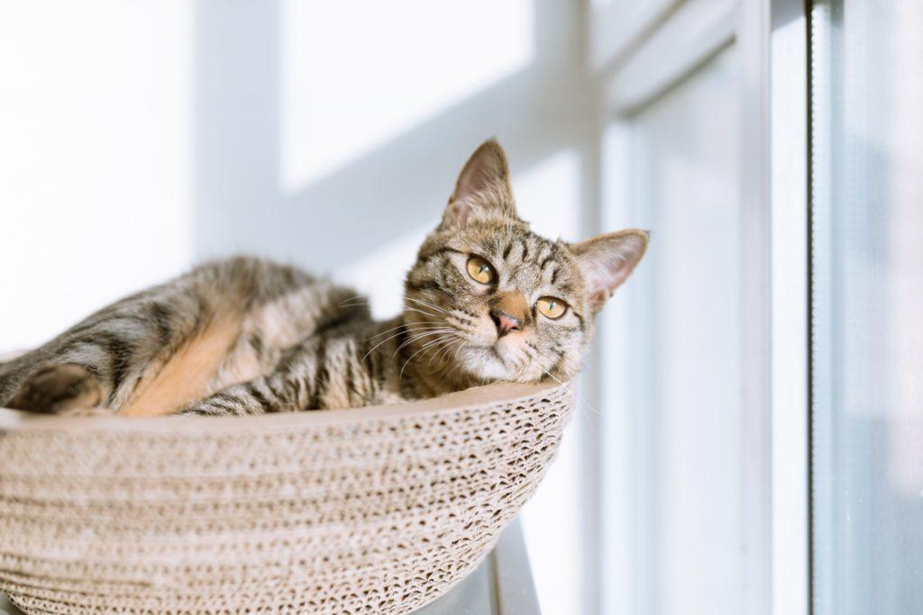 Кошкин дом: как обустроить жилье к появлению питомца?