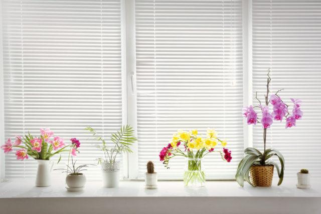Чем закрыть окна от солнца: 5 способов спасти квартиру от жары