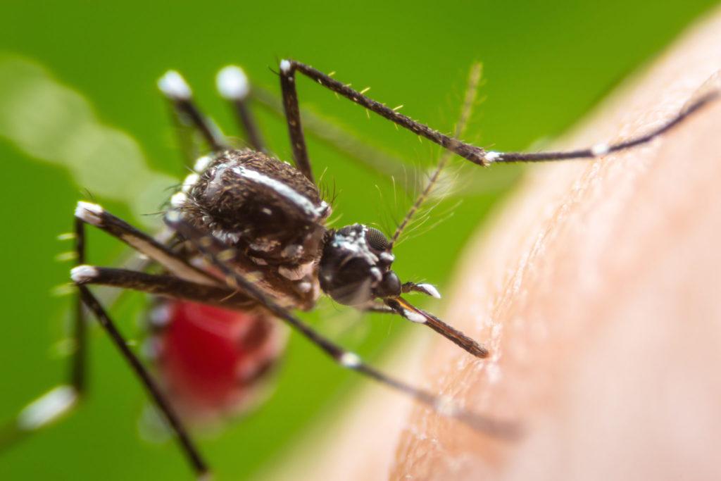 Опасно! Укусы насекомых: профилактика и лечение